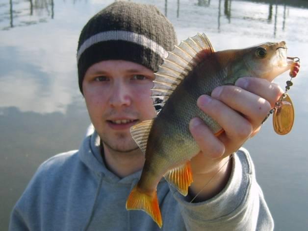 Angeln mit spinnern und blinkern dicht am fisch for Fisch barsch