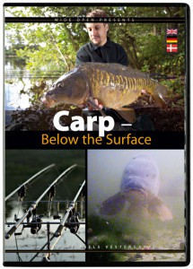 Carp below the surface