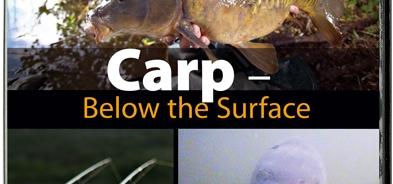 Photo of Carp – Below the Surface (Karpfenangeln aus einer anderen Perspektive)