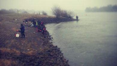Stint in der Elbe