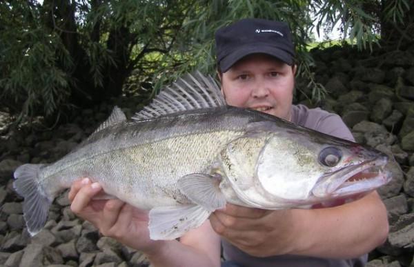 Photo of 2011: Fangberichte vom Zanderangeln