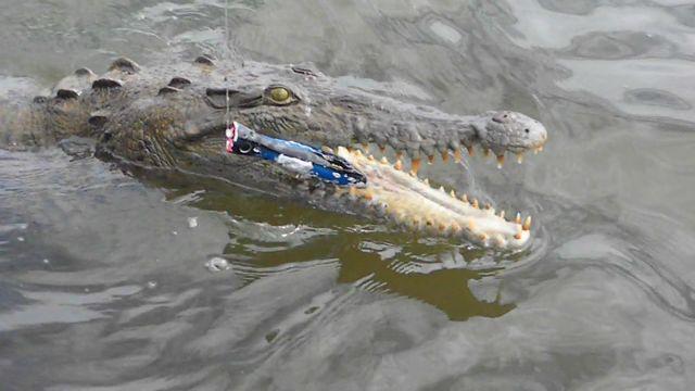 Photo of Ungewollter Fang beim Angeln: Als Beifang gab´s ein Krokodil