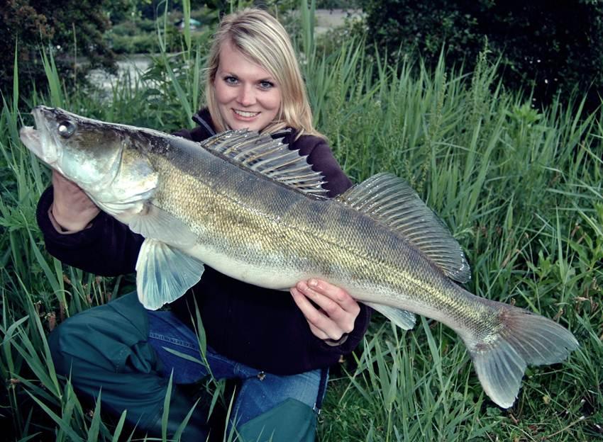 Anika joswig mit neuen pb zander dicht am fisch for Fisch barsch