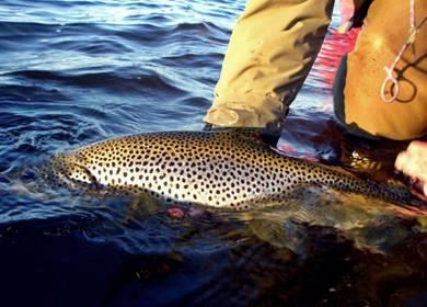 """Photo of """"Nur"""" gut 100 Fische in 6 Tagen… Island"""