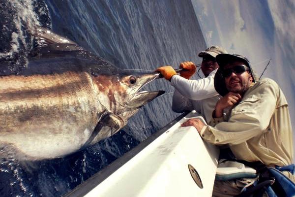 Photo of Große Fische im Pazifik