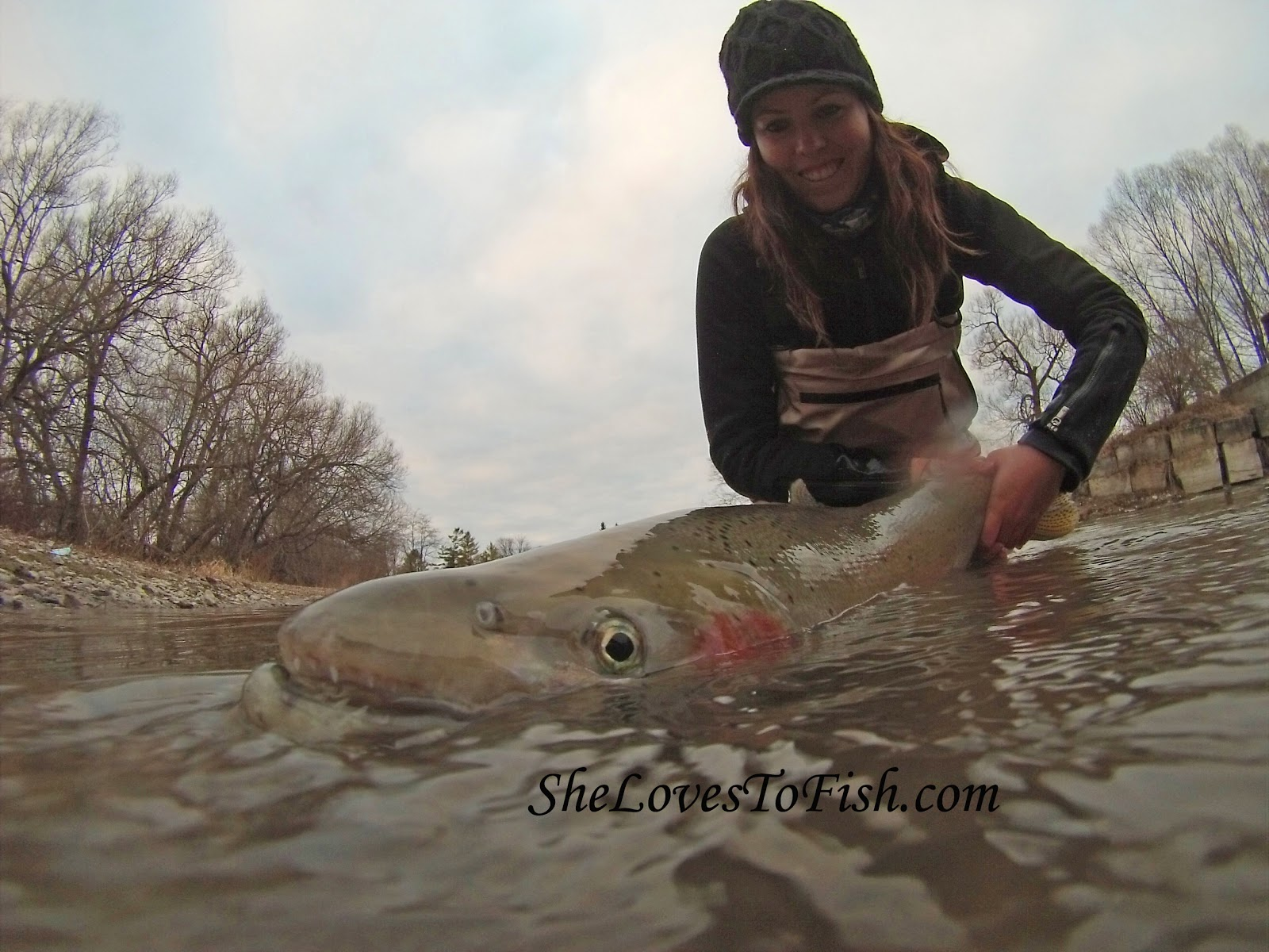 Kapitaler Steelhead