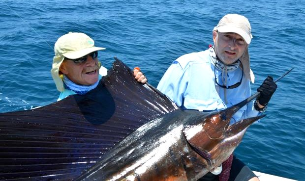 Starker Sailfish