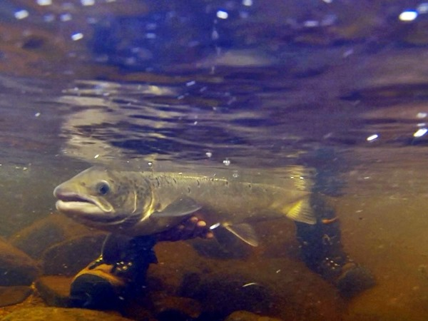 Photo of Forellen, Lachse und das Polarlicht