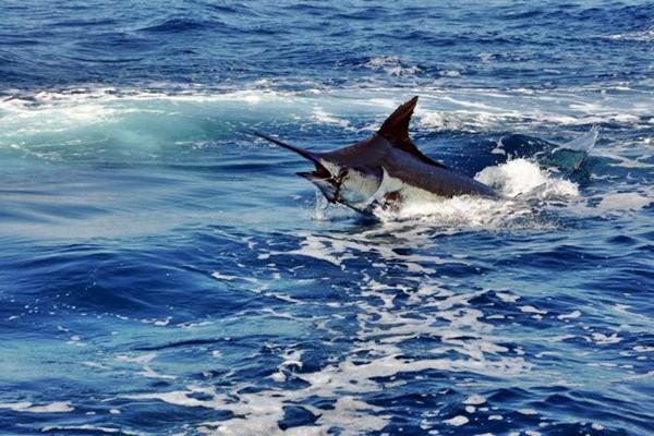 Marlin im drill – körperliche fitness ist unabdingbar für solche