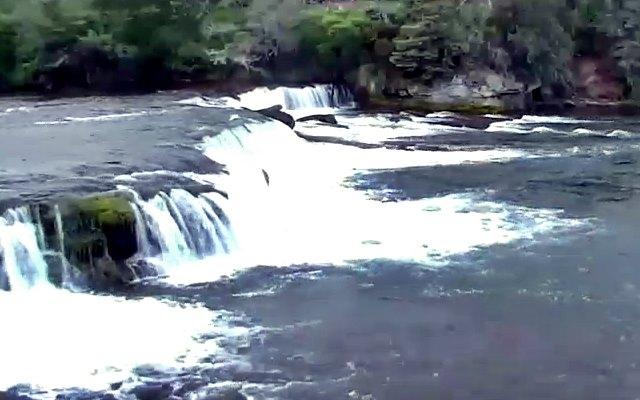 webcam Brooke Falls, Salmon, Bear