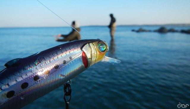 Photo of News für Angler: 4 Jahre im Zelt gelebt und geangelt…
