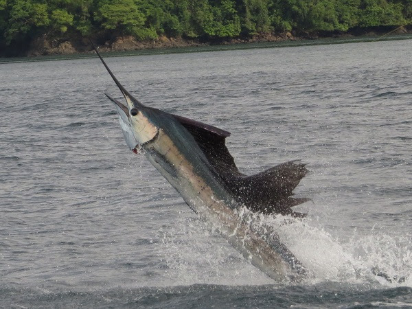 Photo of Big Game in Panama