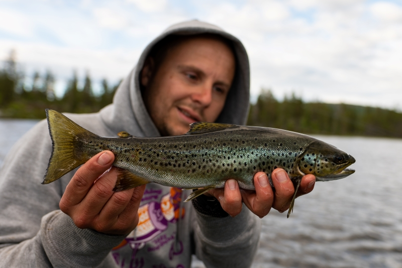 Trout Norway