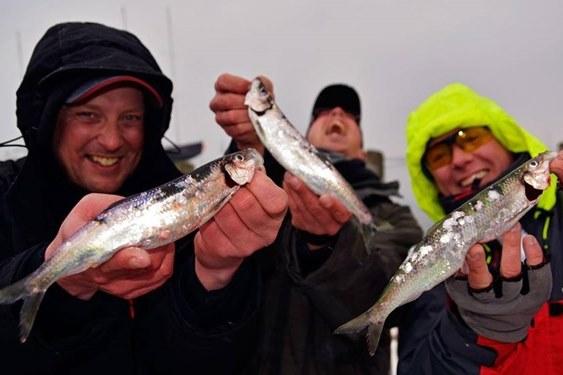 Saison 2020 - Angler mit Heringen