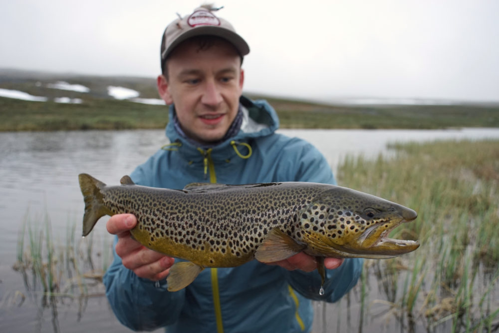 Fliegenfischen auf Bachforellen in Lappland